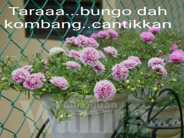 Image Result For Cara Merawat Bunga