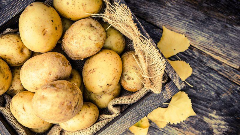 bahaya makan kentang yang dah keluar tunas