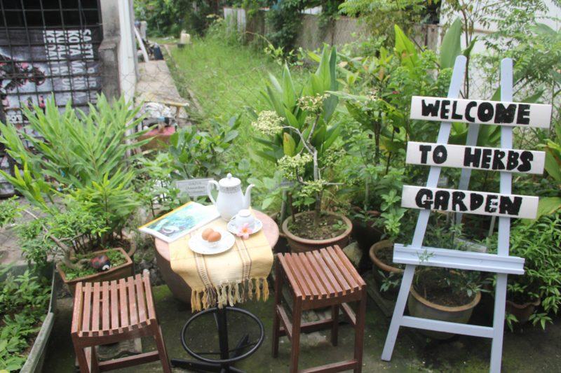 Sejuk Tangan Dia Ini 9 Rahsia Taman Herba Belakang Rumah Teres Lot Tengah