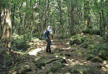 Wanita Ini Lalui Pengalaman Seram, Sebaik Kaki Jejak 'Hutan Bunuh Diri' Di Jepun